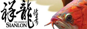 大庆水族批发市场 大庆水族馆 大庆龙鱼